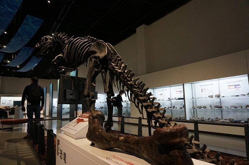 恐竜の化石