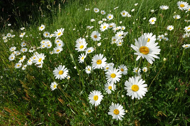 野花もきれい
